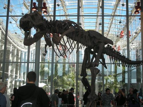 Tyrannosaurus / Academy of Sciences