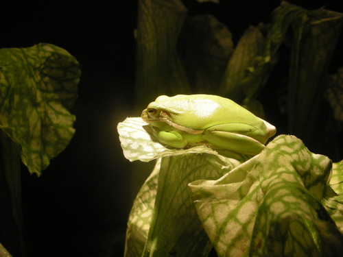 Frog / Academy of Sciences