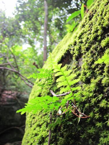 denseforest2